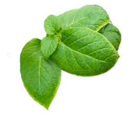 Home - Leaves PNG 274x225