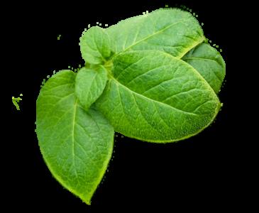 Wesgrow-Leaves-PNG.png - Leaves PNG 365x300