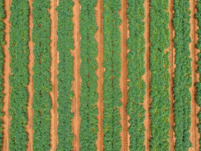 Seed-Potatos - Seed Potatos 400x300
