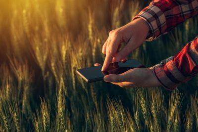 Agronomist using smart phone app to analyze crop development - agronomist using smart phone app to analyze crop development 400x267