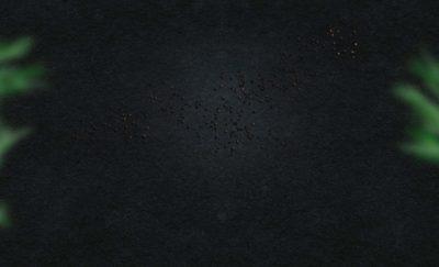 Wesgrow-About Us-dark-bg-1.jpg - ecobeef home dark bg 1 400x243